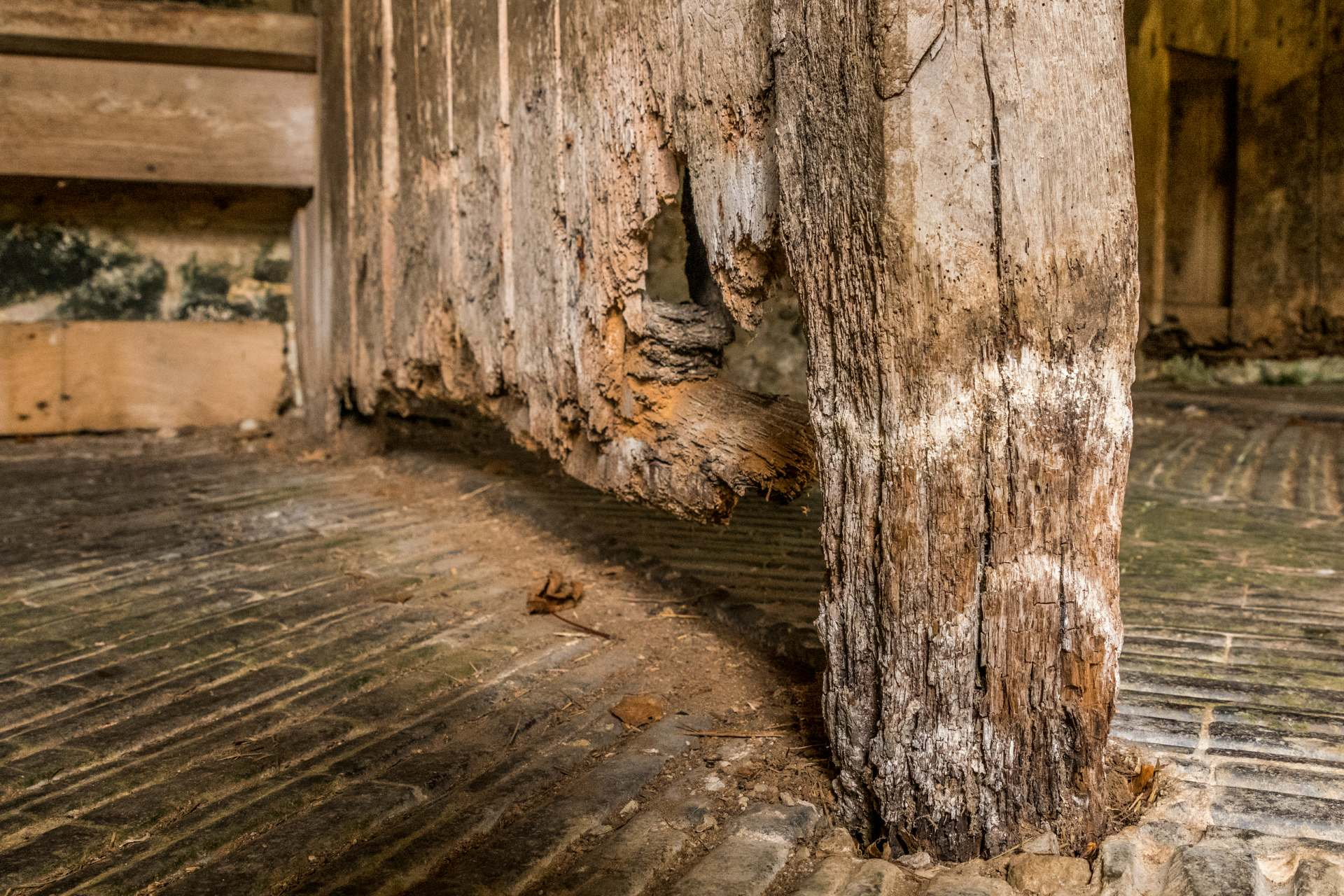 Wet Rot Dry Rot Carmarthen